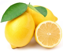 FRESH LEMON from ADESH EXPORT