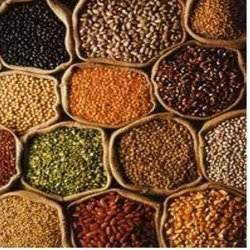FOOD GRAINS from AGRI TRADE INDIA SERVICES PVT.LTD.