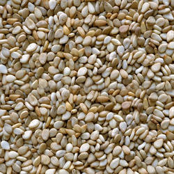NATURAL SESAME SEEDS from M. LAKHAMSI & CO
