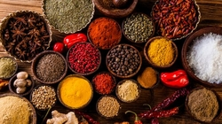 SPICES from OM SHREE INTERNATIONAL PVT LTD